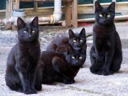 gatti-neri
