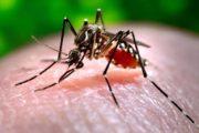 Virus Chikungunya; la Regione Lazio attiva nuove procedure operative per i donatori