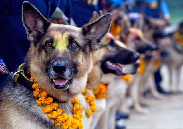 In Nepal ogni anno un giorno dedicato alla fedeltà dei cani; il Kukur Tihar