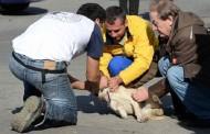 Cuccioli uccisi a bastonate presso Gela; indignazione delle associazioni animaliste