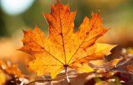 Si sta come d'autunno sugli alberi le foglie;  precarietà di un popolo vittima di se stesso - Editoriale